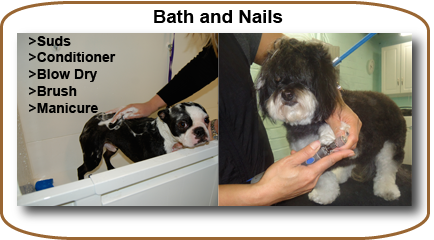 Photo of dogs getting bath and nail trim